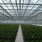 Commercial Greenhouse 2
