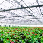 Commercial Greenhouse 3