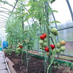 Commercial Greenhouse 4